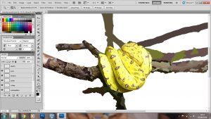 Chondro Snake Photoshop Artwork