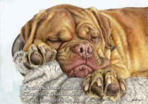 Pet Portraits - Commission an Artwork